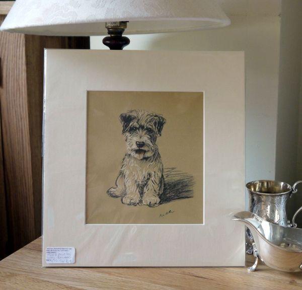 Little Coloured Terrier - sitting face on 1930's print by Lucy Dawson - Ter D8